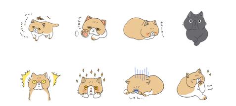 エキゾチックショートヘアのペタン猫