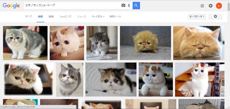 エキゾチックショートヘア - Google 検索